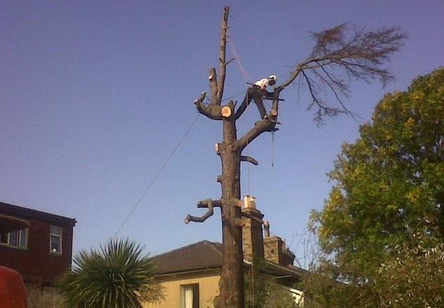 Tree-Surgeons-Sale-Manchester