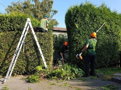 hedge cutting Sale