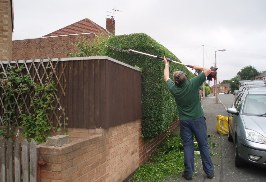 hedge removals Sale